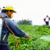 Pesticide Storage Regulations